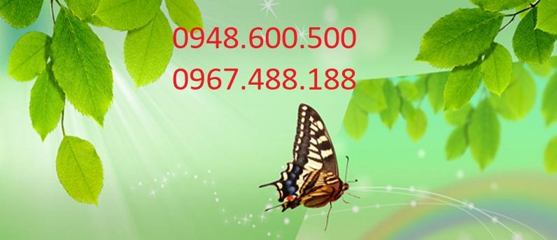 hút hầm cầu quận 1 0967488188